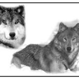 Эскизы татуировок волка, собак, тигра и орла 2012