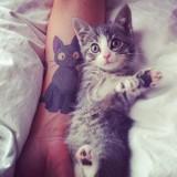 Красивые татуировки котов — 8 фото