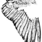 Эскизы крыльев — 6 фото
