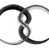 Змея 2013 года