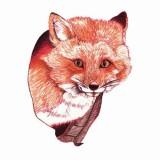 Цветные эскизы лисы (6 фото)