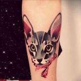 Ушастый кот на руке