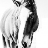 Эскизы лошадей (6 фото)