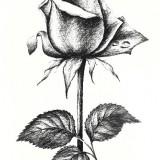 Эскизы розы (6 фото)