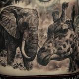 Жираф и слон на спине