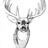 Значение татуировки: олень