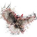 Эскизы совы