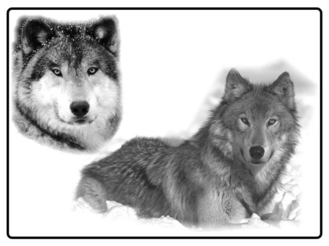 тату волков