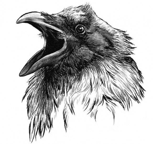 Ворон татуировка (11)