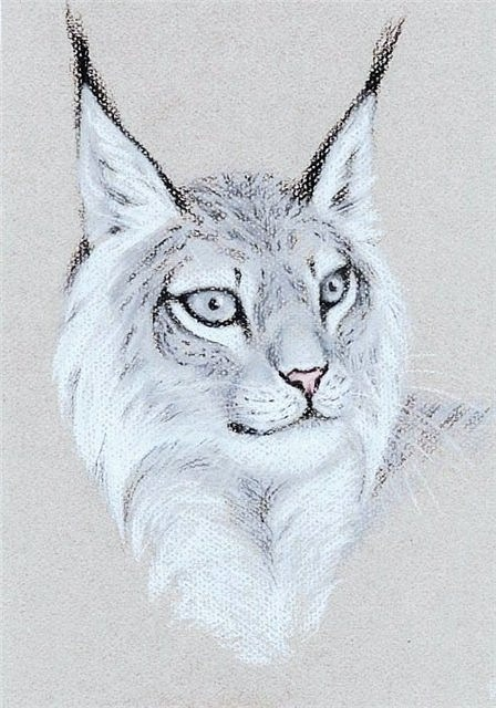 Татуировка рысь (2)