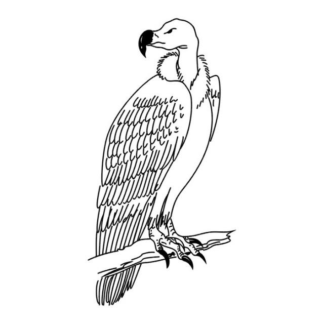 татуировки птицы (12)