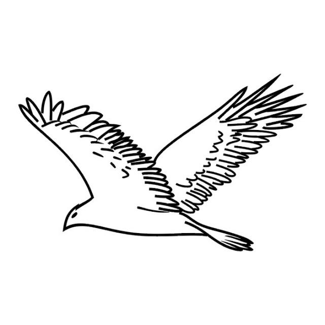 Птицы (21)