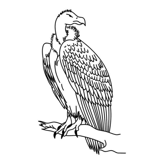 Птицы (28)