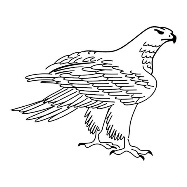 Птицы (27)