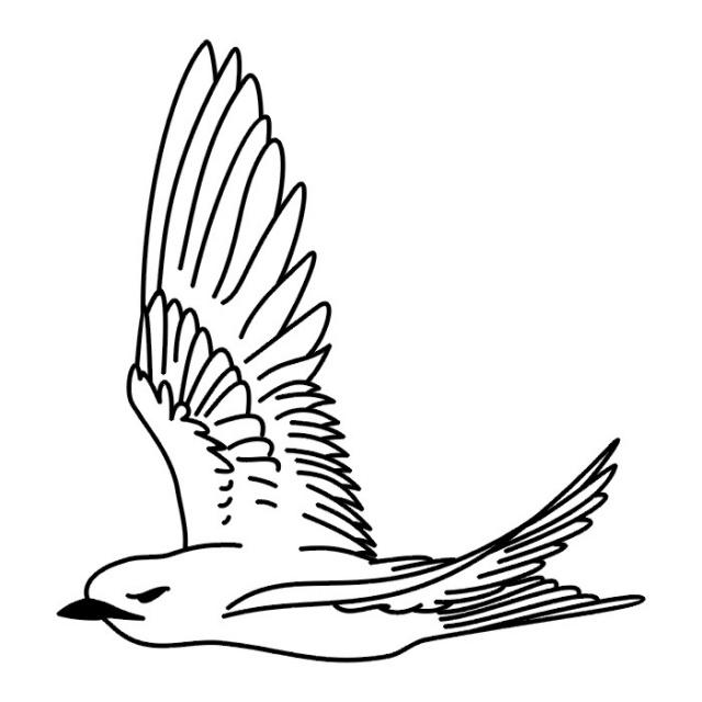 Птицы (25)
