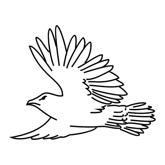 Птицы (23)