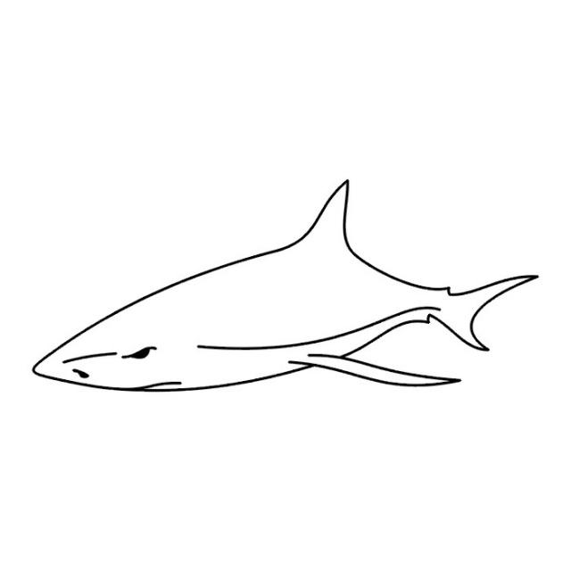 эскизы татуировок акулы (13)