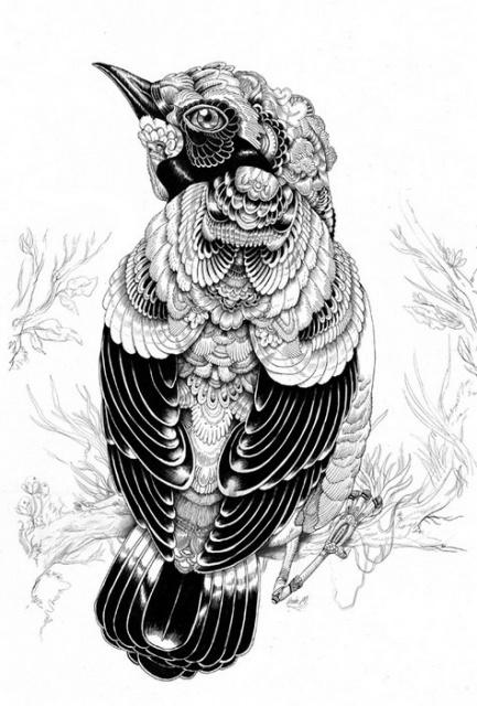 Черно-белые эскизы летающих животных (4)