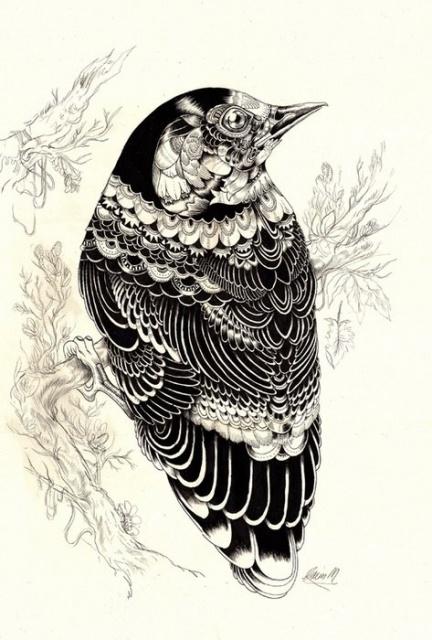 Черно-белые эскизы летающих животных (2)