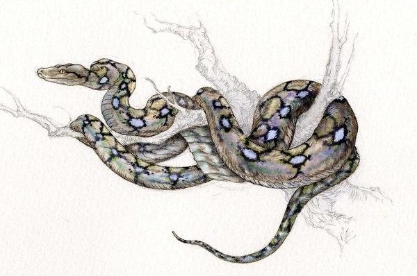 Цветные эскизы змей 2013 (3)