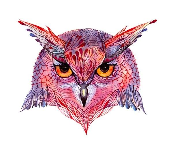 Цветные идеи эскизов татуировок сова