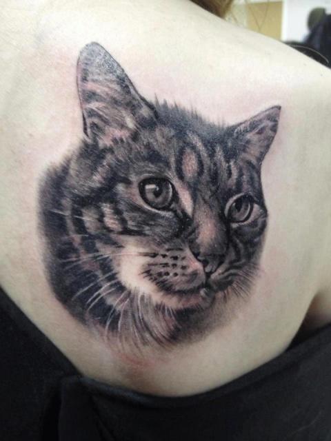 Коты тату (4)