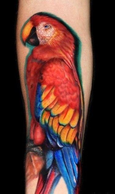 попугай ара тату (7)