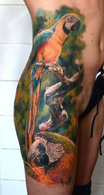 попугай ара тату (6)