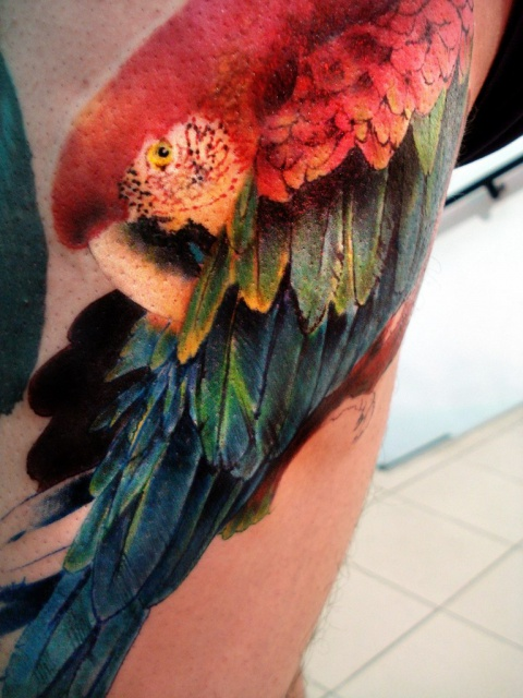 попугай ара тату (5)