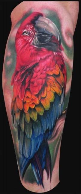 попугай ара тату (4)