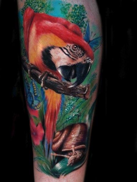 попугай ара тату (3)