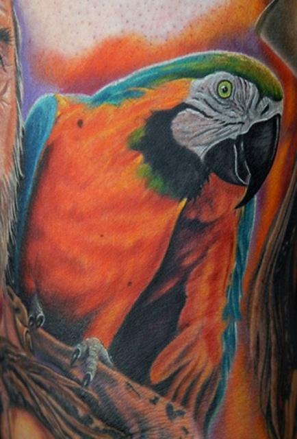 попугай ара тату (2)