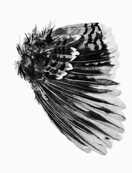 Эскизы крыльев (5)
