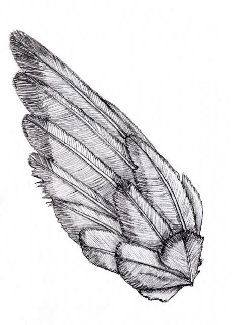 Эскизы крыльев (3)