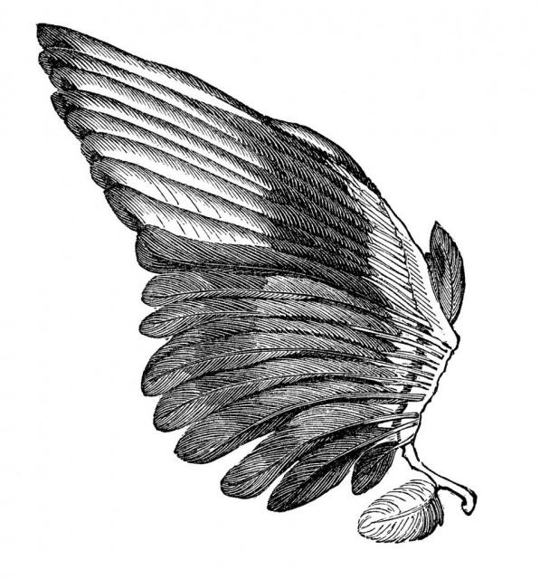 Эскизы крыльев (2)