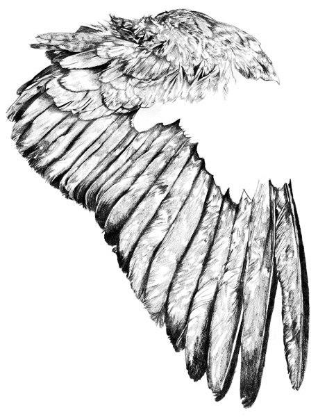 Эскизы крыльев (1)