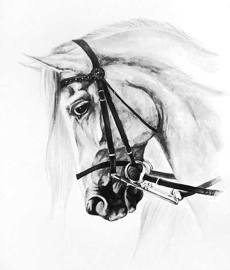 эскизы лошади (6)