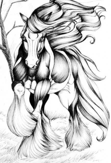 эскизы лошади (5)