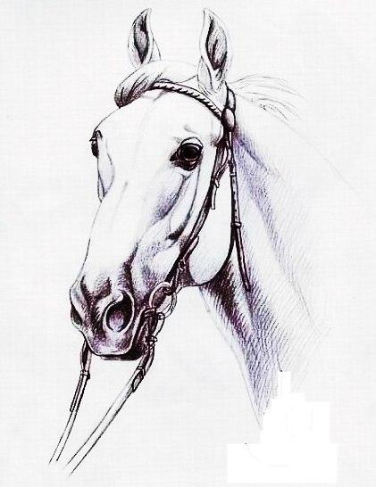 эскизы лошади (4)