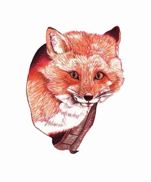 Цветные эскизы лисы (1)