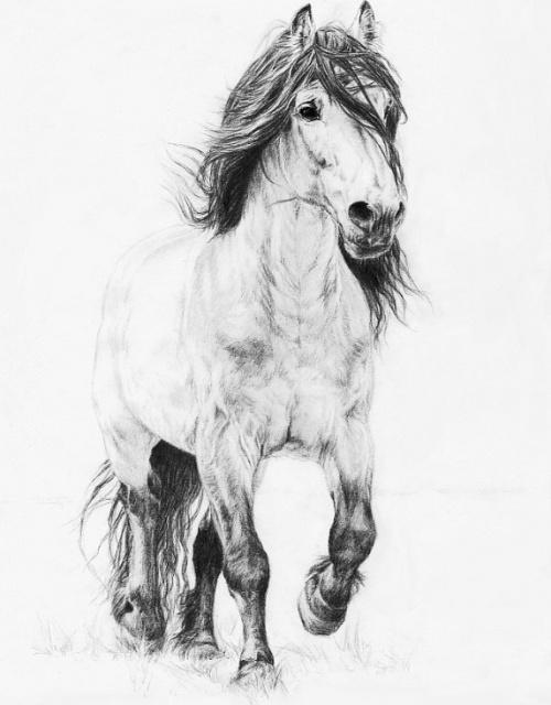 эскизы лошади (2)