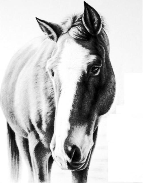 эскизы лошади (1)