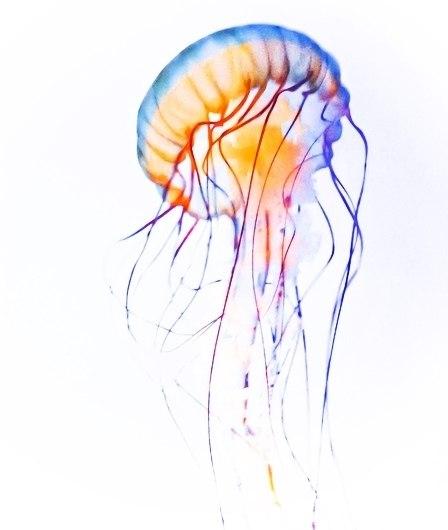 эскизы медузы (6)