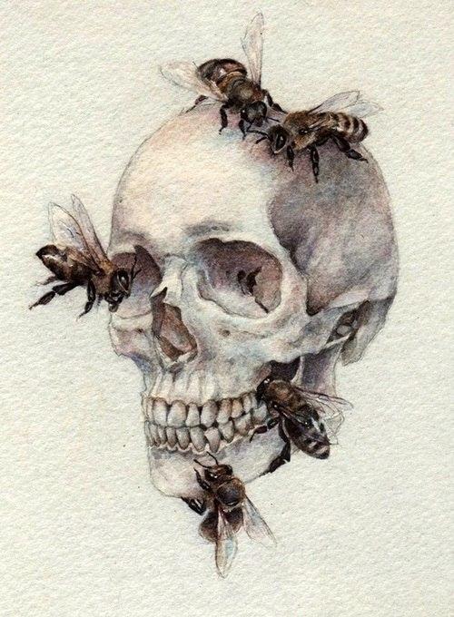 эскиз черепа