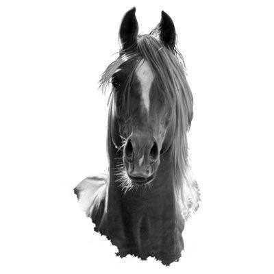 эскизы лошади для татуировок (6)