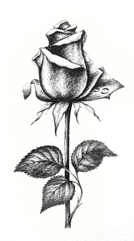 Эскизы татуировок розы цветы