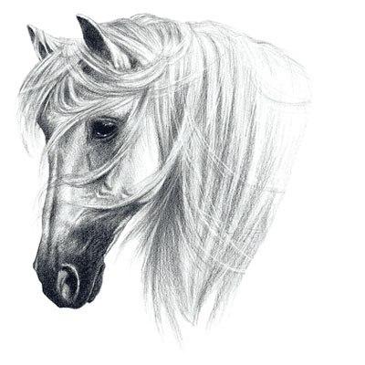 эскизы лошади для татуировок (1)