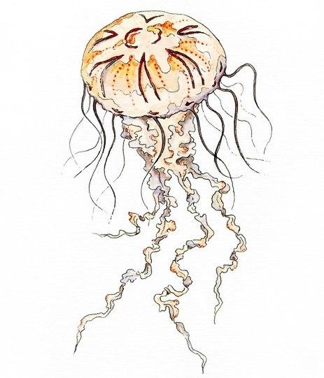 эскизы медузы (2)