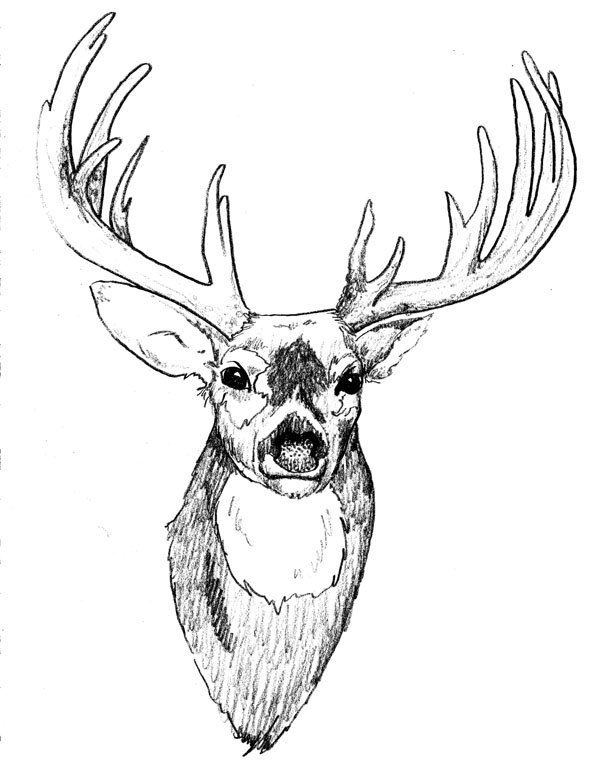 deer head drawing tumblr - photo #13