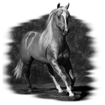 эскизы лошади для татуировок (2)